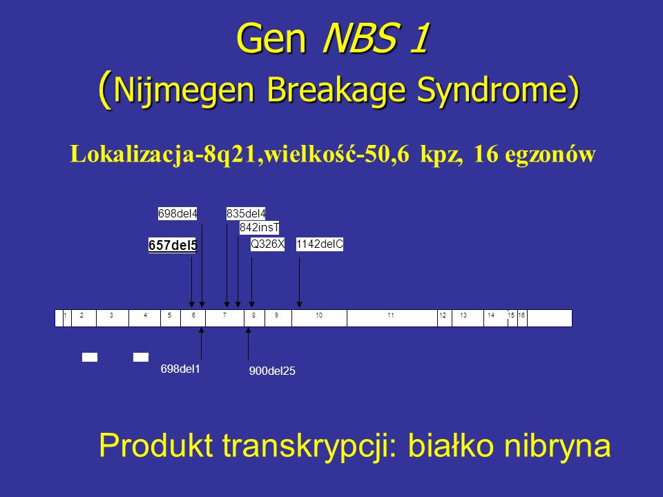 Gen NBS 1 (Nijmegen Breakage Syndrome)