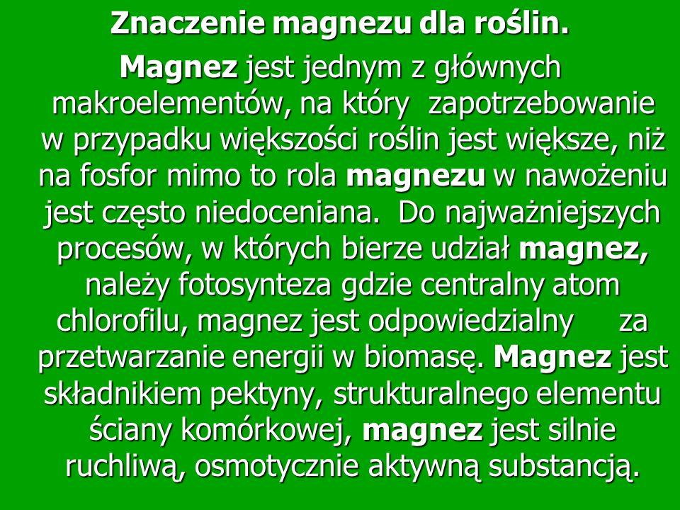 Znaczenie magnezu dla roślin.