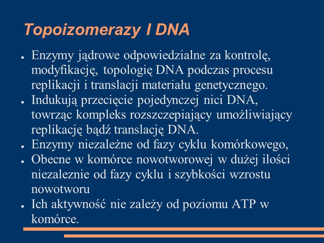 Topoizomerazy I DNA