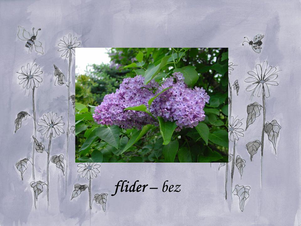 flider – bez