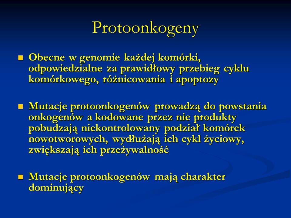 Protoonkogeny Obecne w genomie każdej komórki, odpowiedzialne za prawidłowy przebieg cyklu komórkowego, różnicowania i apoptozy.
