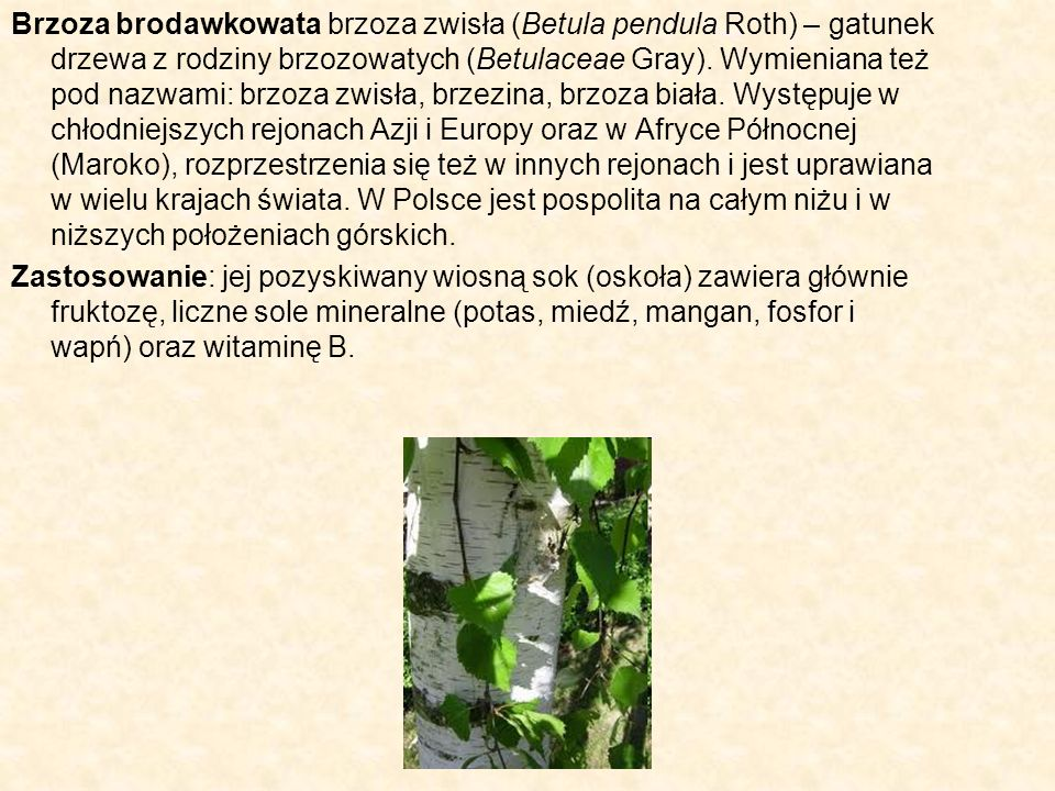 Brzoza brodawkowata brzoza zwisła (Betula pendula Roth) – gatunek drzewa z rodziny brzozowatych (Betulaceae Gray). Wymieniana też pod nazwami: brzoza zwisła, brzezina, brzoza biała. Występuje w chłodniejszych rejonach Azji i Europy oraz w Afryce Północnej (Maroko), rozprzestrzenia się też w innych rejonach i jest uprawiana w wielu krajach świata. W Polsce jest pospolita na całym niżu i w niższych położeniach górskich.