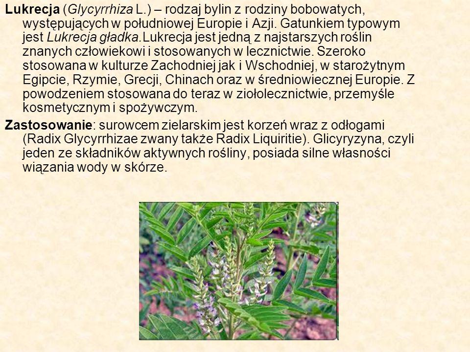 Lukrecja (Glycyrrhiza L