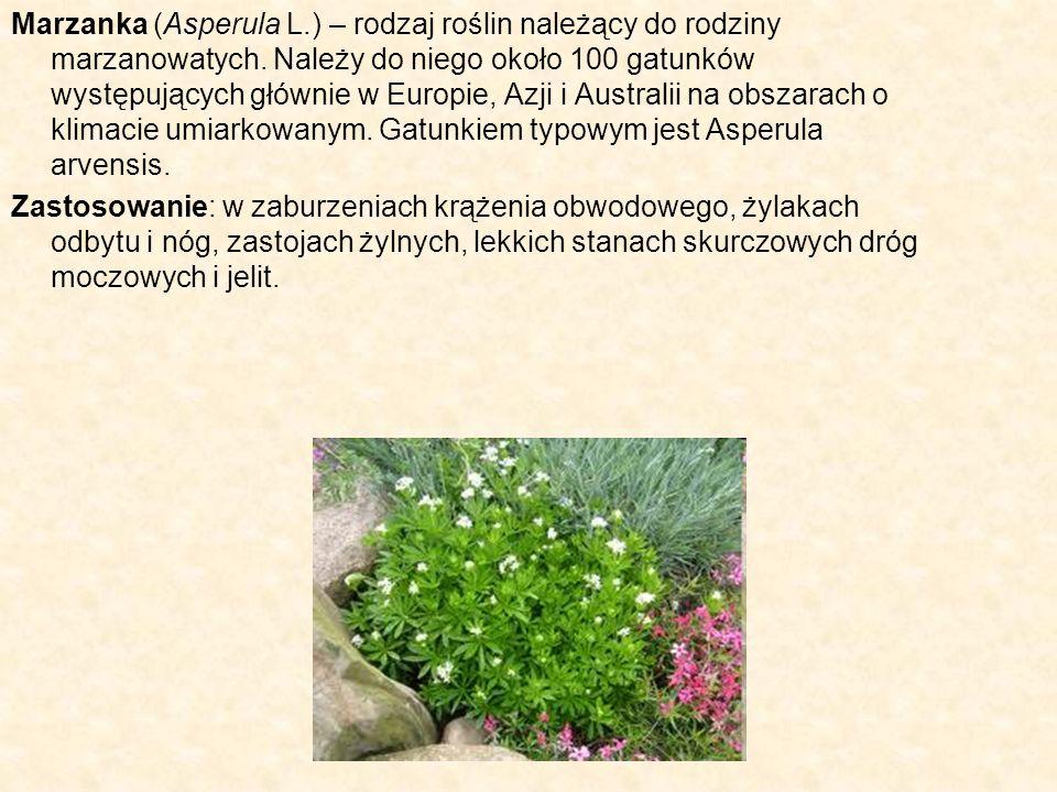 Marzanka (Asperula L.) – rodzaj roślin należący do rodziny marzanowatych. Należy do niego około 100 gatunków występujących głównie w Europie, Azji i Australii na obszarach o klimacie umiarkowanym. Gatunkiem typowym jest Asperula arvensis.