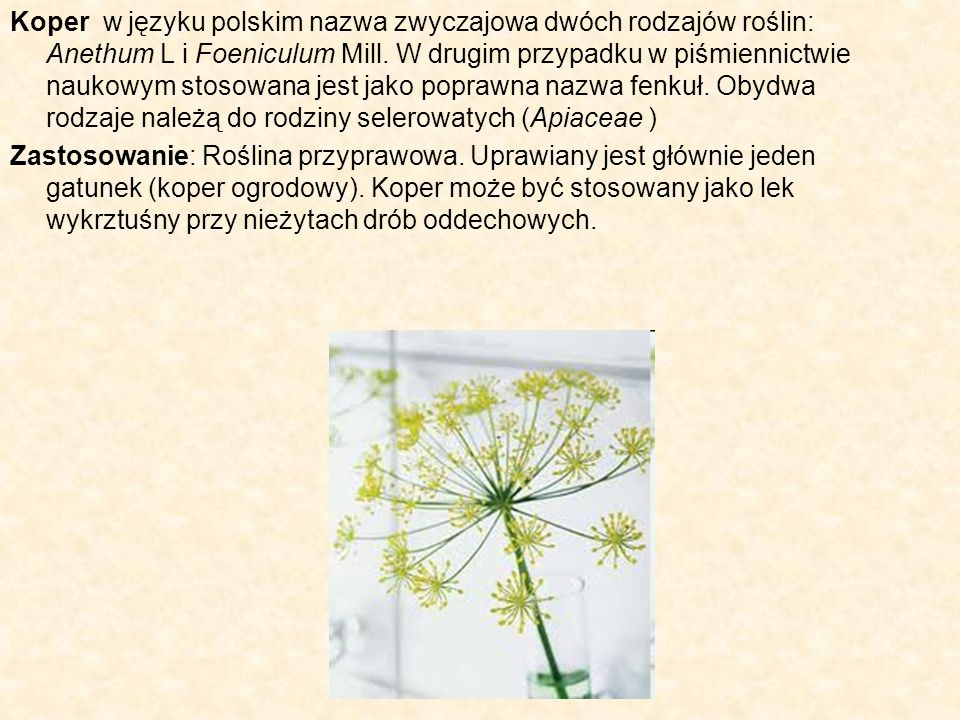 Koper w języku polskim nazwa zwyczajowa dwóch rodzajów roślin: Anethum L i Foeniculum Mill. W drugim przypadku w piśmiennictwie naukowym stosowana jest jako poprawna nazwa fenkuł. Obydwa rodzaje należą do rodziny selerowatych (Apiaceae )