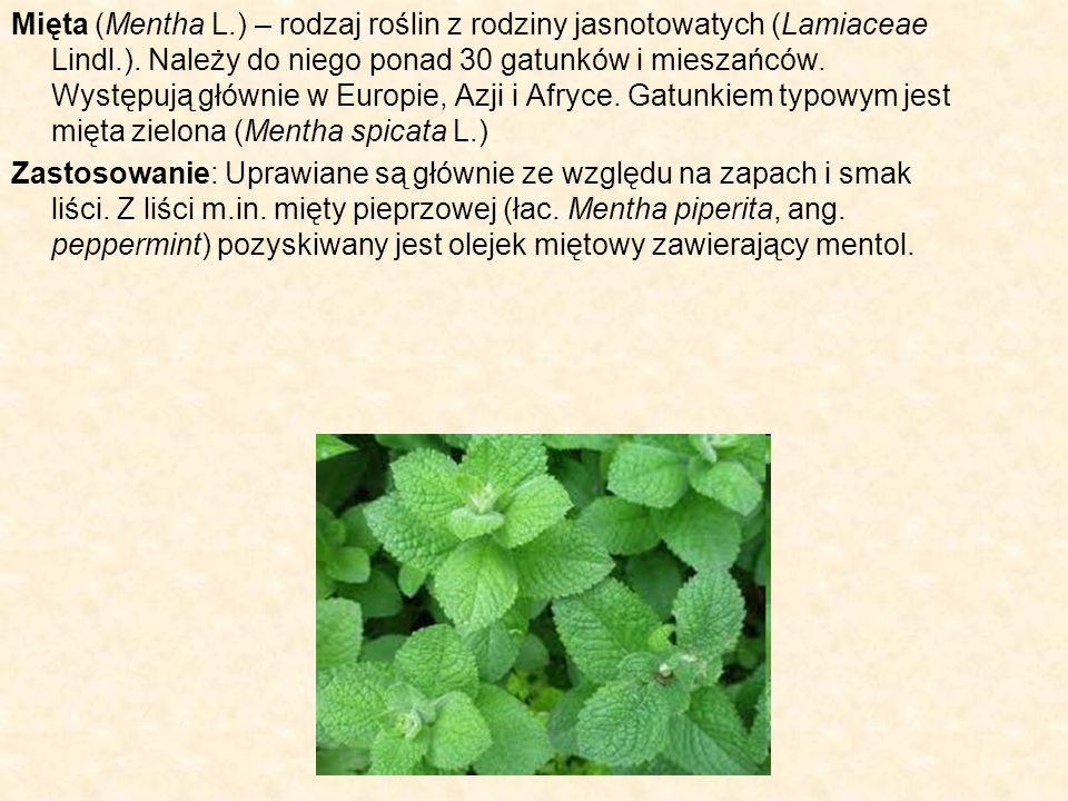 Mięta (Mentha L.) – rodzaj roślin z rodziny jasnotowatych (Lamiaceae Lindl.). Należy do niego ponad 30 gatunków i mieszańców. Występują głównie w Europie, Azji i Afryce. Gatunkiem typowym jest mięta zielona (Mentha spicata L.)
