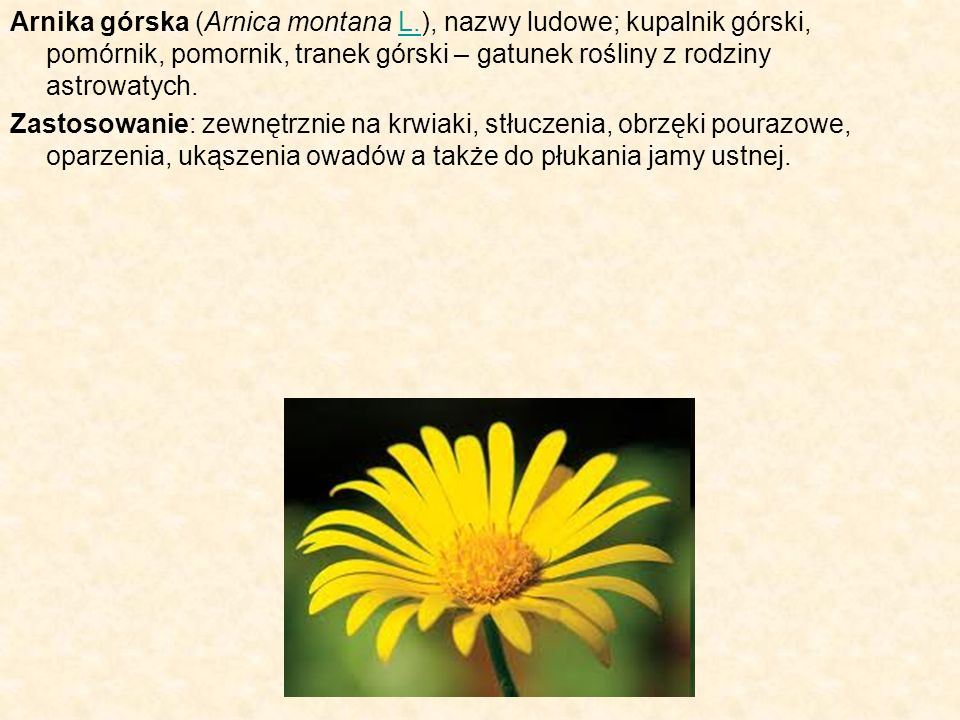 Arnika górska (Arnica montana L