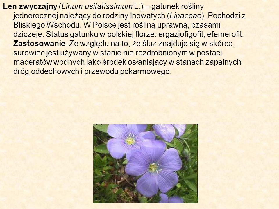 Len zwyczajny (Linum usitatissimum L