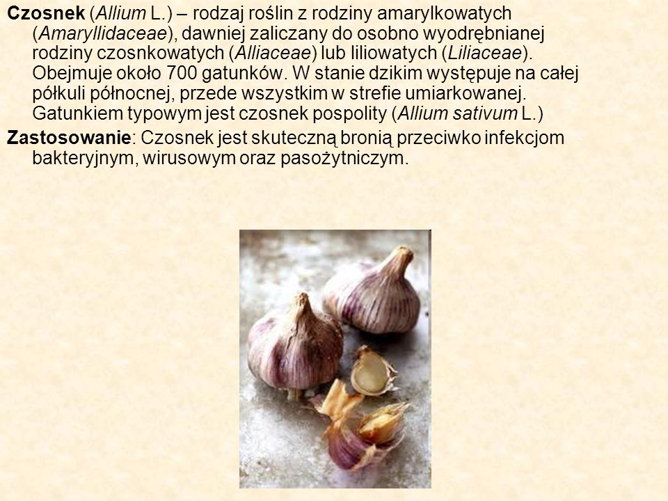 Czosnek (Allium L.) – rodzaj roślin z rodziny amarylkowatych (Amaryllidaceae), dawniej zaliczany do osobno wyodrębnianej rodziny czosnkowatych (Alliaceae) lub liliowatych (Liliaceae). Obejmuje około 700 gatunków. W stanie dzikim występuje na całej półkuli północnej, przede wszystkim w strefie umiarkowanej. Gatunkiem typowym jest czosnek pospolity (Allium sativum L.)
