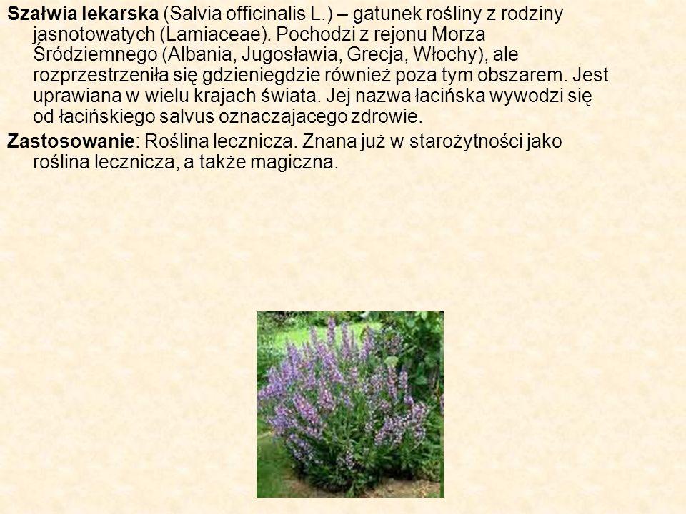Szałwia lekarska (Salvia officinalis L