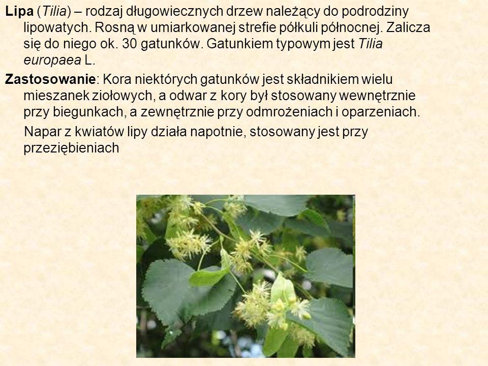Lipa (Tilia) – rodzaj długowiecznych drzew należący do podrodziny lipowatych. Rosną w umiarkowanej strefie półkuli północnej. Zalicza się do niego ok. 30 gatunków. Gatunkiem typowym jest Tilia europaea L.