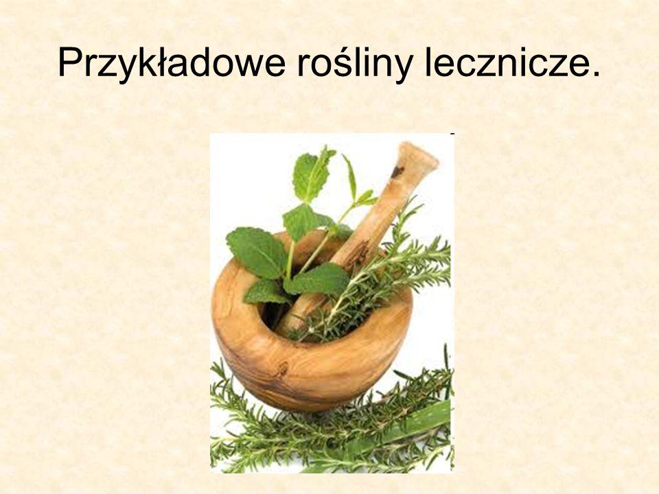 Przykładowe rośliny lecznicze.