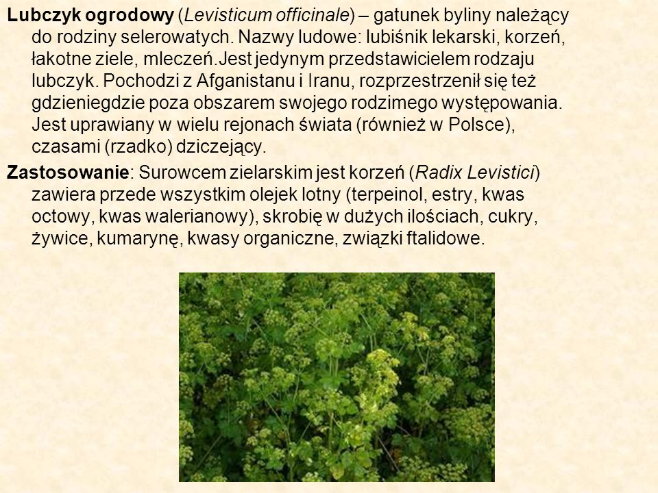 Lubczyk ogrodowy (Levisticum officinale) – gatunek byliny należący do rodziny selerowatych. Nazwy ludowe: lubiśnik lekarski, korzeń, łakotne ziele, mleczeń.Jest jedynym przedstawicielem rodzaju lubczyk. Pochodzi z Afganistanu i Iranu, rozprzestrzenił się też gdzieniegdzie poza obszarem swojego rodzimego występowania. Jest uprawiany w wielu rejonach świata (również w Polsce), czasami (rzadko) dziczejący.