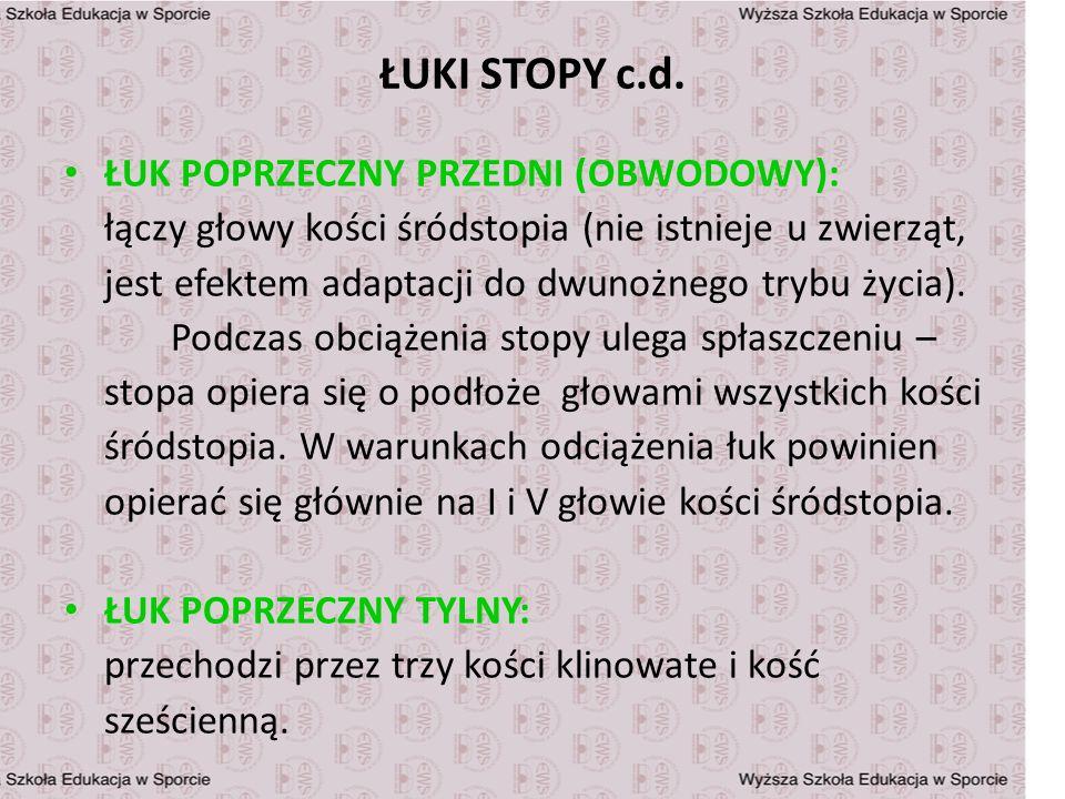ŁUKI STOPY c.d. ŁUK POPRZECZNY PRZEDNI (OBWODOWY):