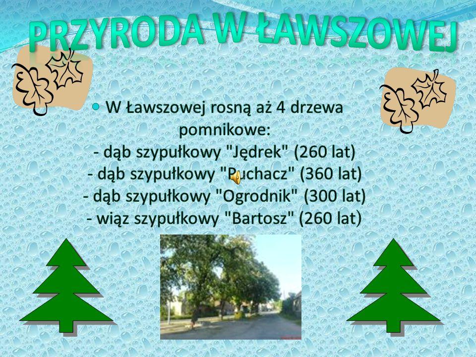 Przyroda w Ławszowej