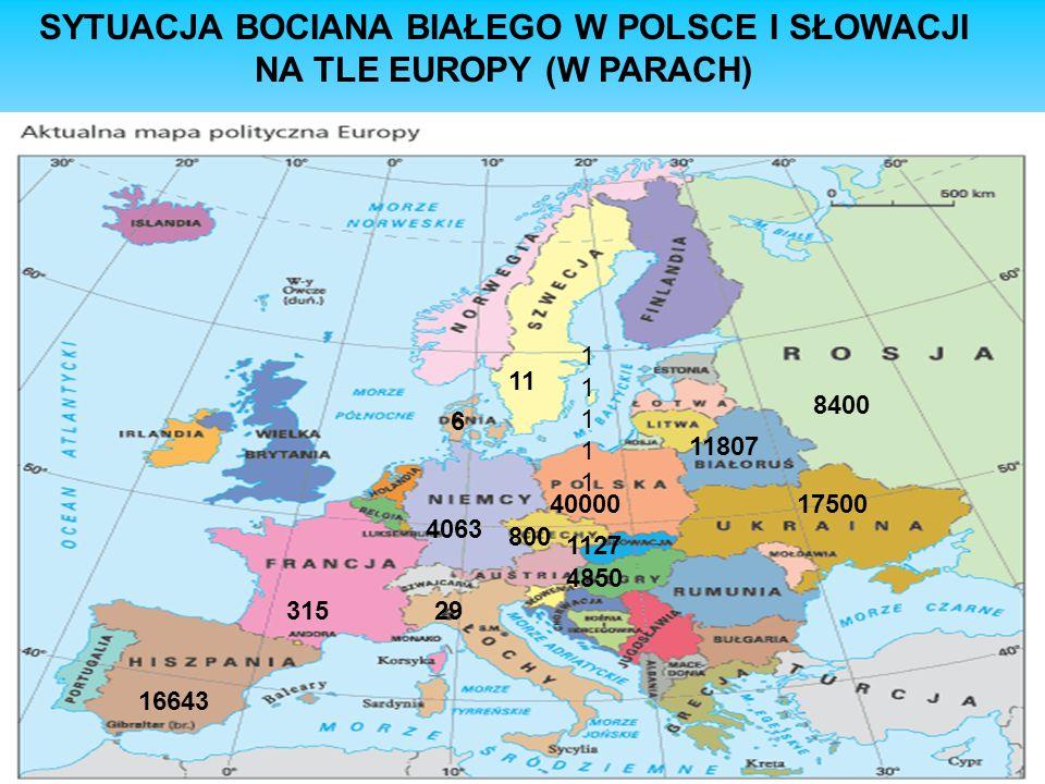 SYTUACJA BOCIANA BIAŁEGO W POLSCE I SŁOWACJI NA TLE EUROPY (W PARACH)