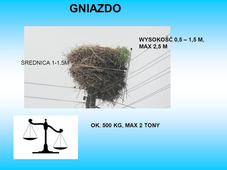 GNIAZDO WYSOKOŚĆ 0,5 – 1,5 M, MAX 2,5 M ŚREDNICA 1-1,5M