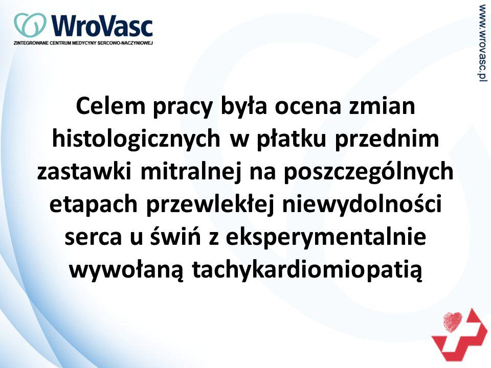 Celem pracy była ocena zmian histologicznych w płatku przednim zastawki mitralnej na poszczególnych etapach przewlekłej niewydolności serca u świń z eksperymentalnie wywołaną tachykardiomiopatią