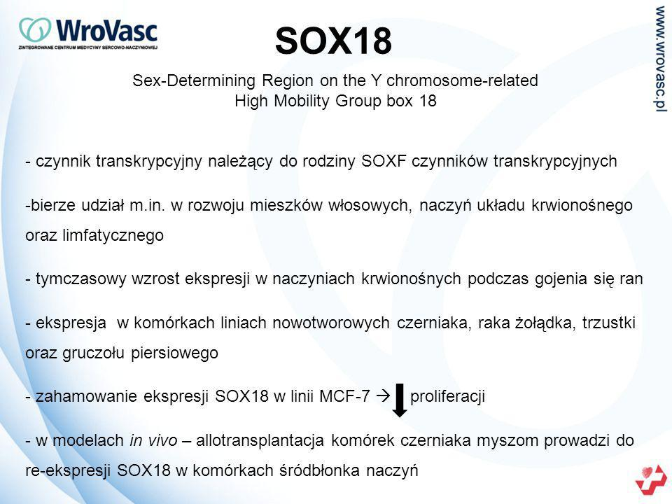 SOX18 Sex-Determining Region on the Y chromosome-related High Mobility Group box 18.
