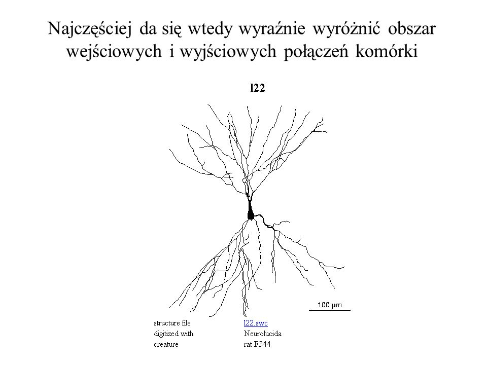 Najczęściej da się wtedy wyraźnie wyróżnić obszar wejściowych i wyjściowych połączeń komórki