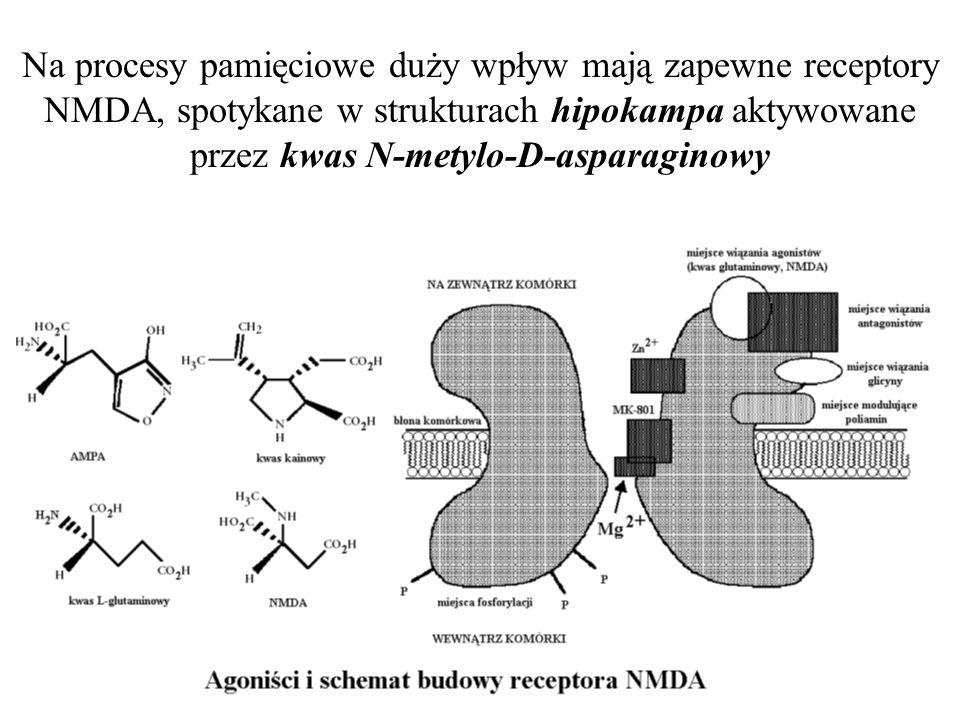 Na procesy pamięciowe duży wpływ mają zapewne receptory NMDA, spotykane w strukturach hipokampa aktywowane przez kwas N-metylo-D-asparaginowy
