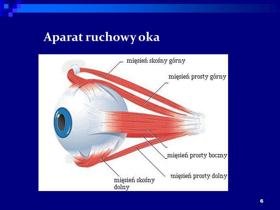 Aparat ruchowy oka