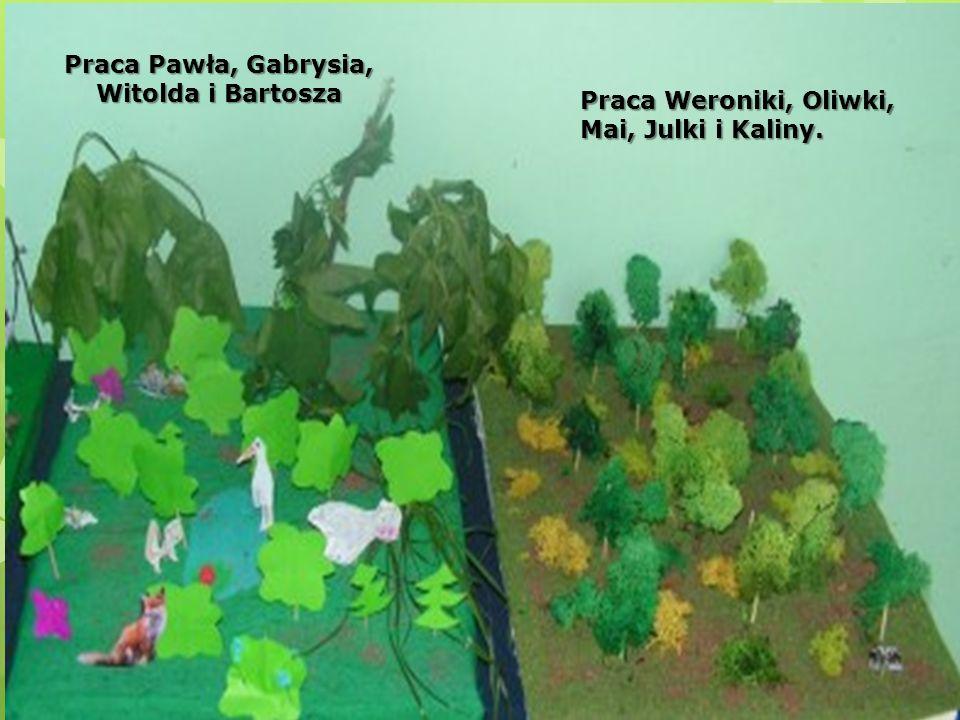 Praca Pawła, Gabrysia, Witolda i Bartosza