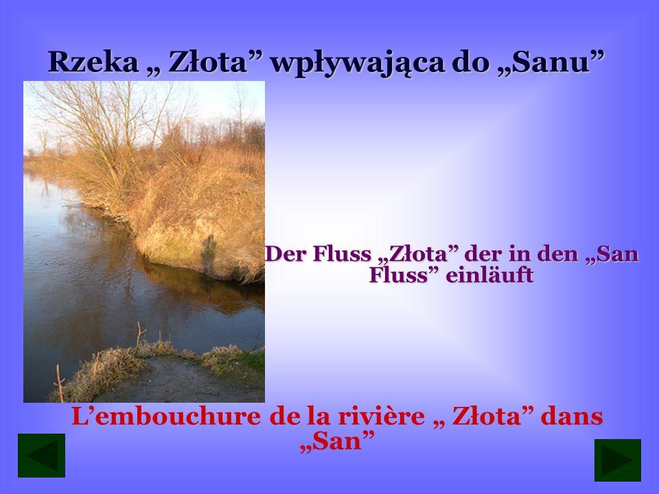 """Rzeka """" Złota wpływająca do """"Sanu"""
