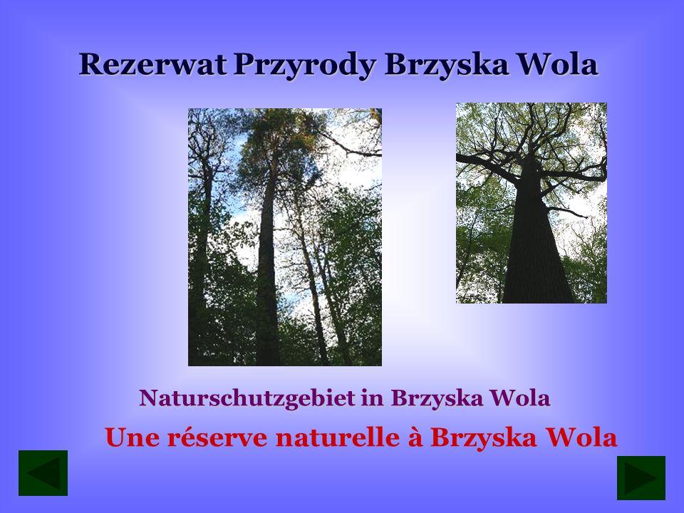 Rezerwat Przyrody Brzyska Wola