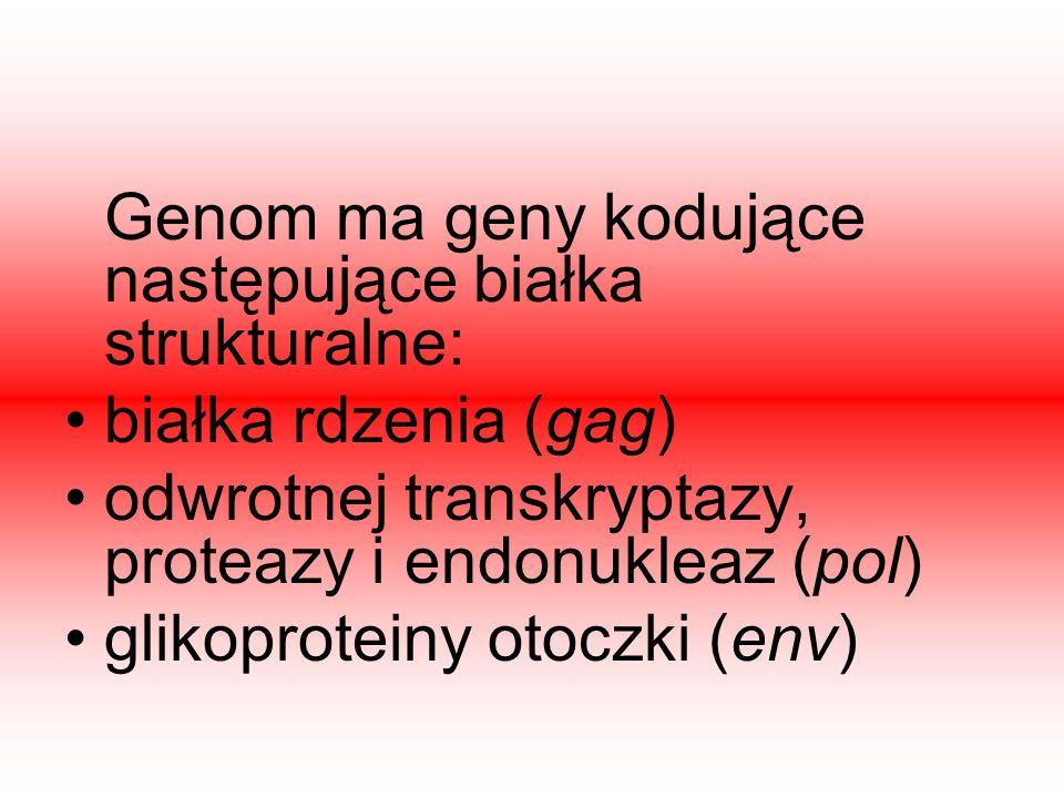 odwrotnej transkryptazy, proteazy i endonukleaz (pol)