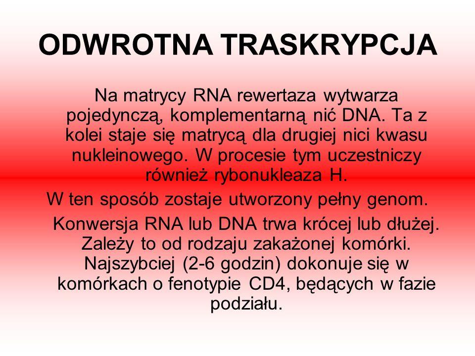 W ten sposób zostaje utworzony pełny genom.