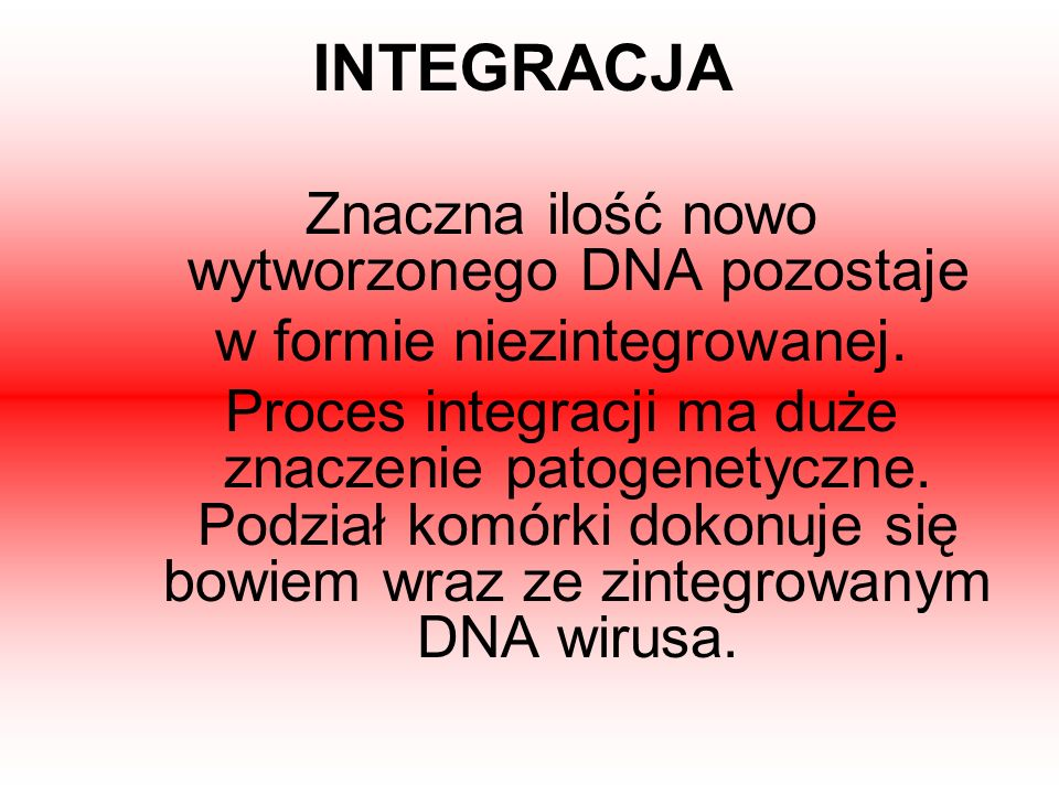 INTEGRACJA Znaczna ilość nowo wytworzonego DNA pozostaje