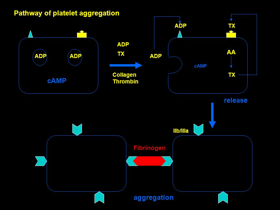 Pathway of platelet aggregation