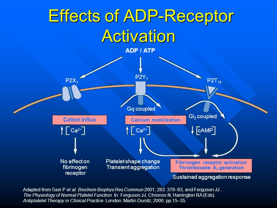 Effects of ADP-Receptor Activation