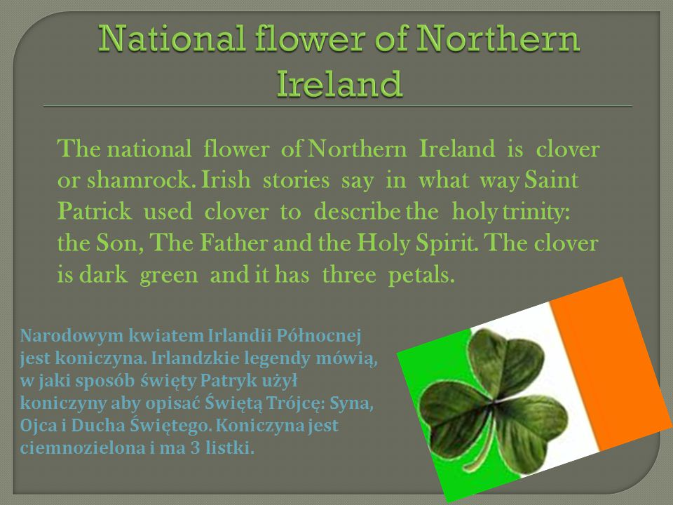 National flower of Northern Ireland