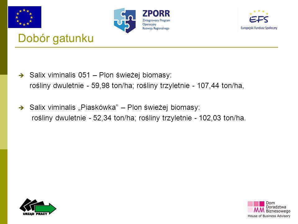 Dobór gatunku Salix viminalis 051 – Plon świeżej biomasy: