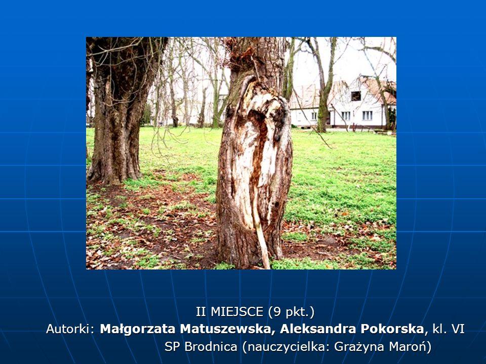 Autorki: Małgorzata Matuszewska, Aleksandra Pokorska, kl. VI