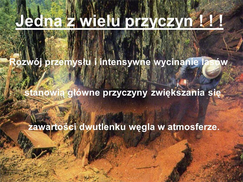 Jedna z wielu przyczyn ! ! ! Rozwój przemysłu i intensywne wycinanie lasów. stanowią główne przyczyny zwiększania się.