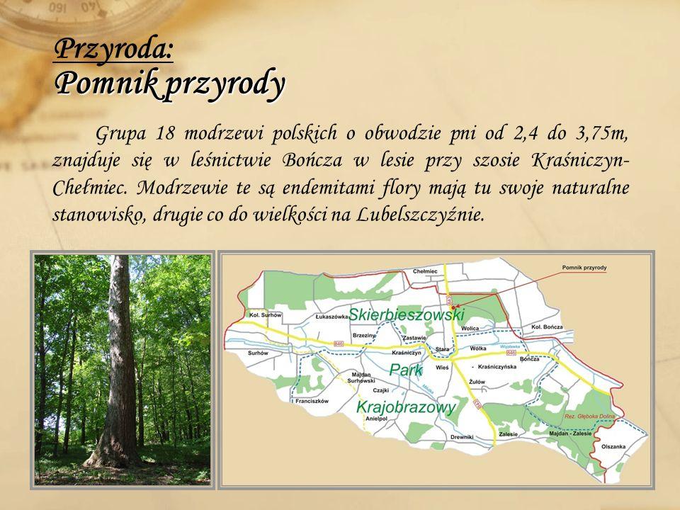 Przyroda: Pomnik przyrody