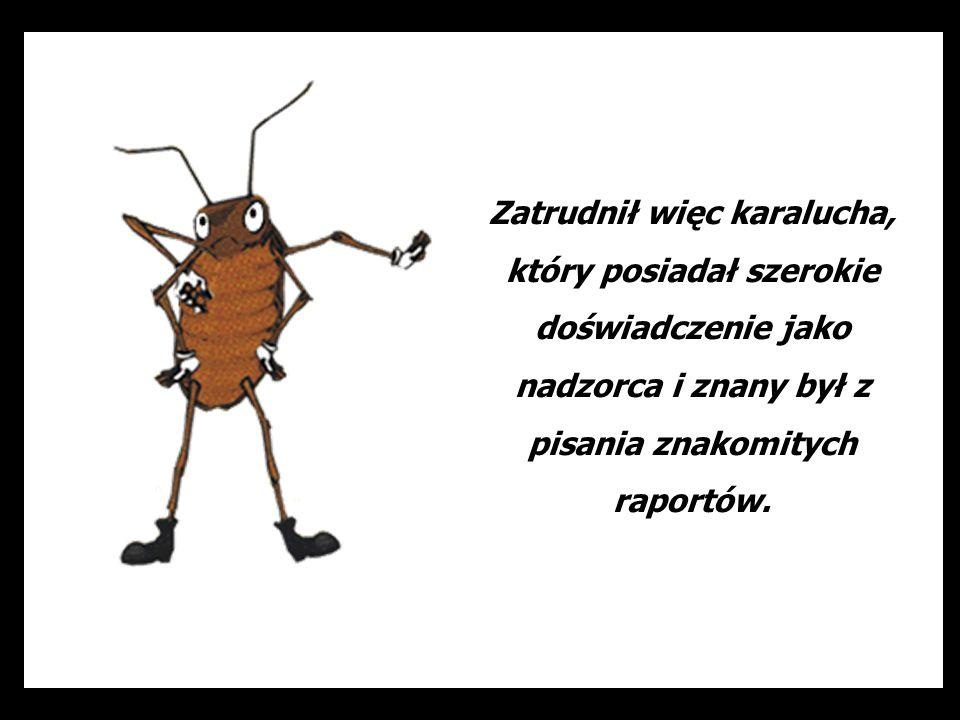Zatrudnił więc karalucha, który posiadał szerokie doświadczenie jako nadzorca i znany był z pisania znakomitych raportów.