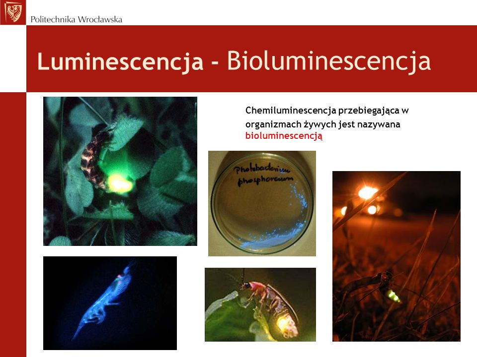 Luminescencja - Bioluminescencja