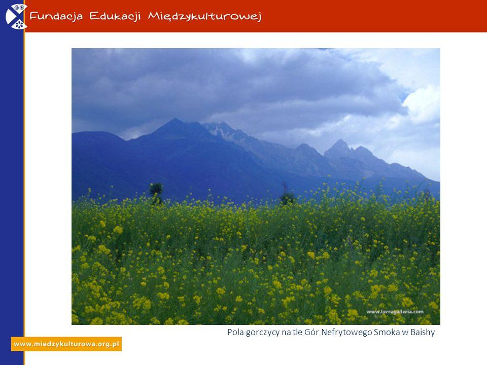 Pola gorczycy na tle Gór Nefrytowego Smoka w Baishy