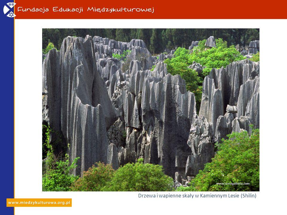 Drzewa i wapienne skały w Kamiennym Lesie (Shilin)