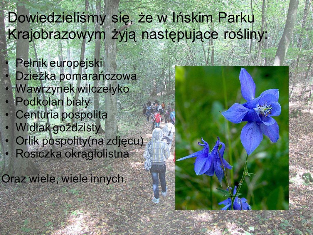 Dowiedzieliśmy się, że w Ińskim Parku Krajobrazowym żyją następujące rośliny: