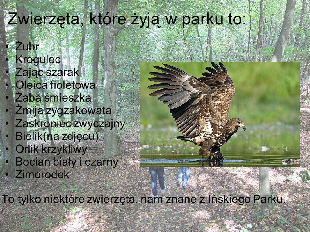 Zwierzęta, które żyją w parku to: