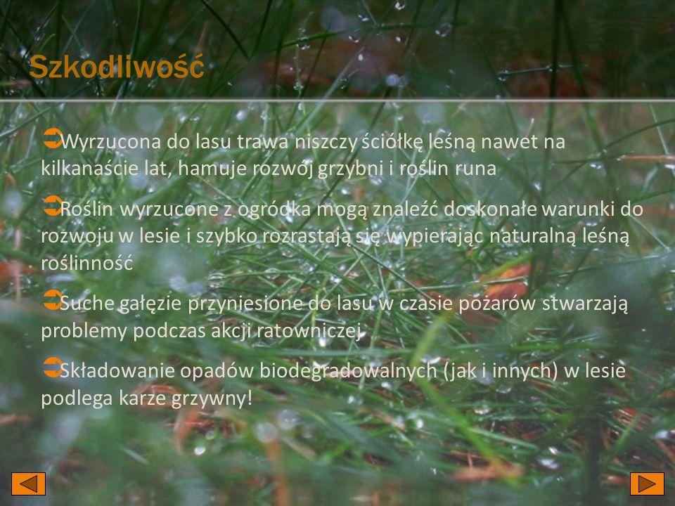 SzkodliwośćWyrzucona do lasu trawa niszczy ściółkę leśną nawet na kilkanaście lat, hamuje rozwój grzybni i roślin runa.