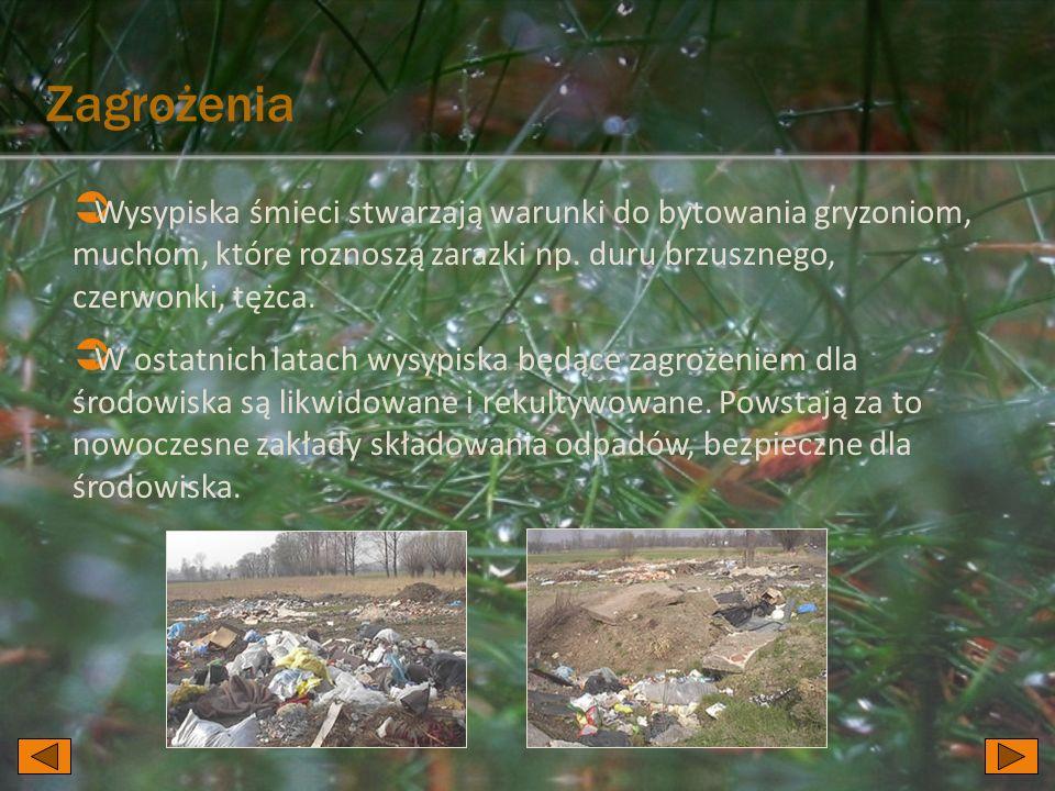 Zagrożenia Wysypiska śmieci stwarzają warunki do bytowania gryzoniom, muchom, które roznoszą zarazki np. duru brzusznego, czerwonki, tężca.