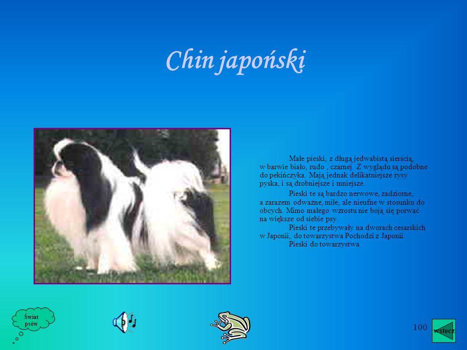 Chin japoński