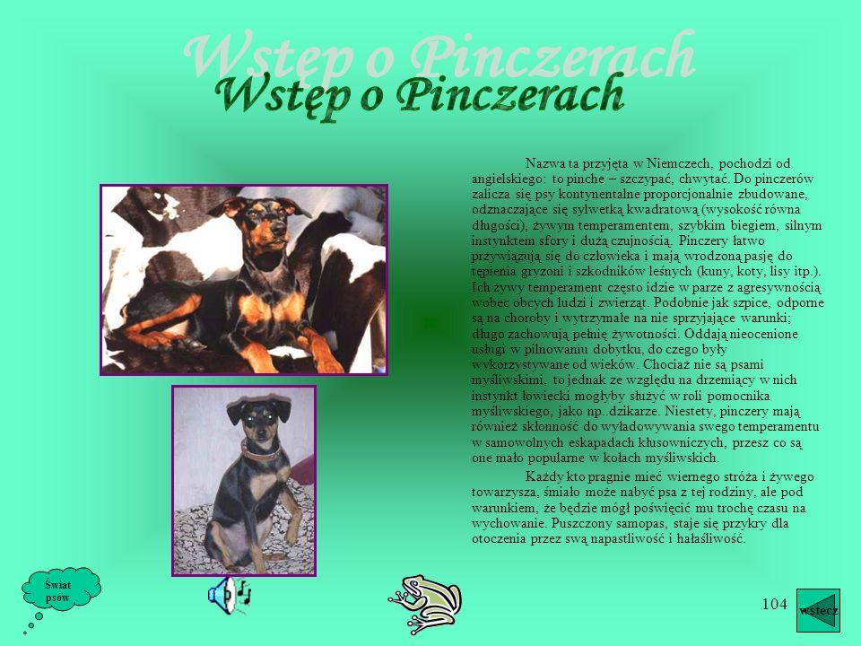 Wstęp o Pinczerach