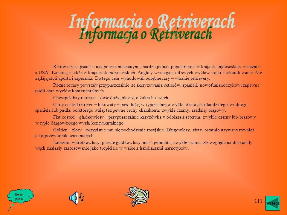 Informacja o Retriverach